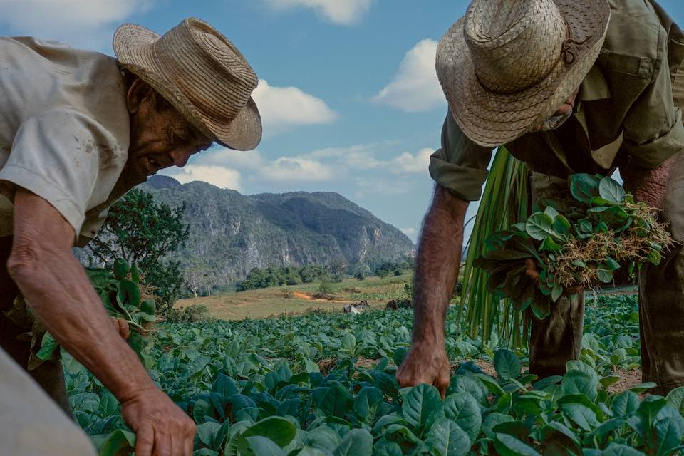 Tobacco workers, Viñales, 2001