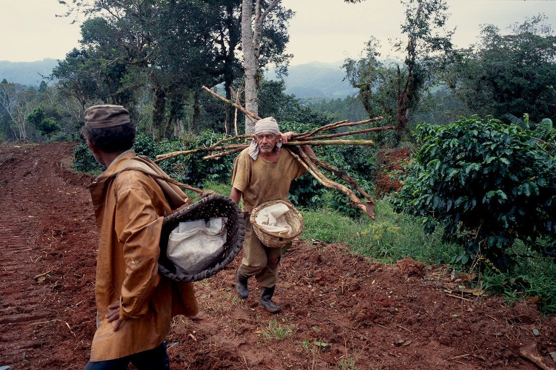 Coffee plantation, Topes de Collates, 1999